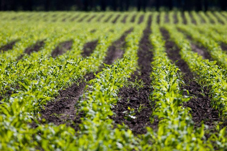 Kast - חקלאות והשקייה