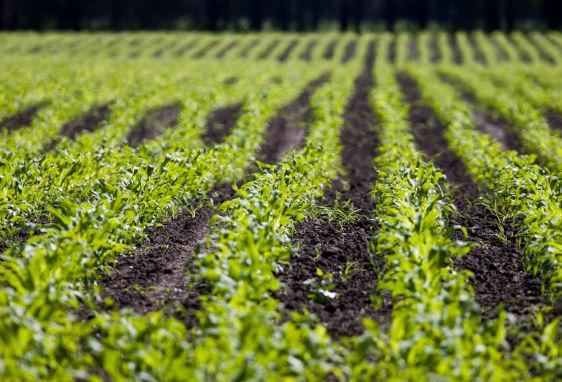 קסט - חקלאות והשקייה
